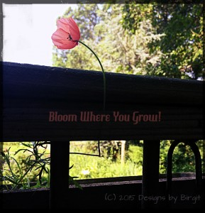 Bloom Where You Grow smaller file size